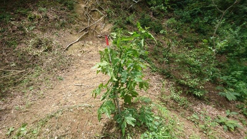 ネムノキの開花と里山フィールドワーク_c0239329_16032805.jpg