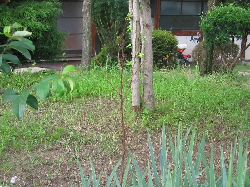 環境改善と科学_f0076731_20563521.jpg