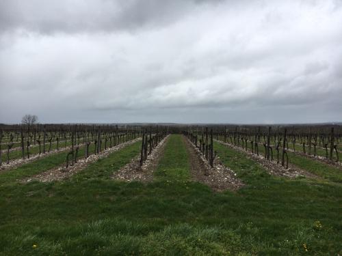 再開封Cognac Château de Montifaud L50と今秋にリリース予定のオリジナルコニャック_d0011635_16311239.jpg