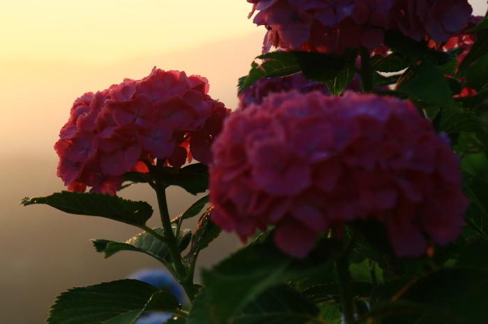 朝陽を受けて_f0371447_10594415.jpg