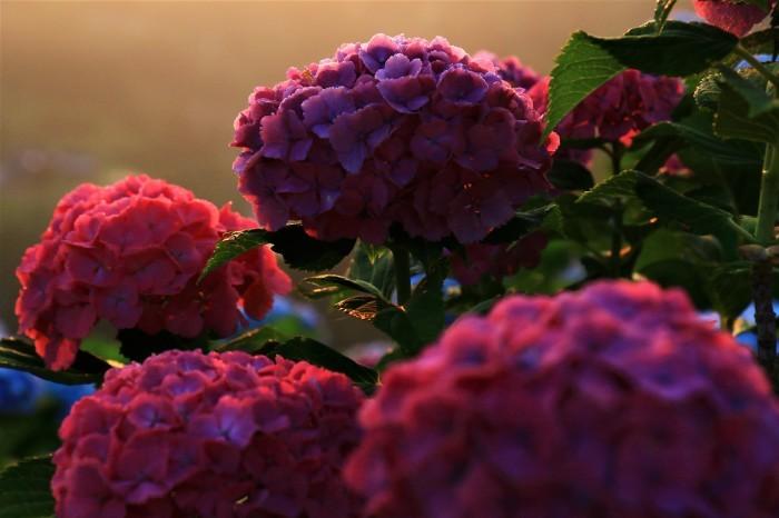 朝陽を受けて_f0371447_11001883.jpg