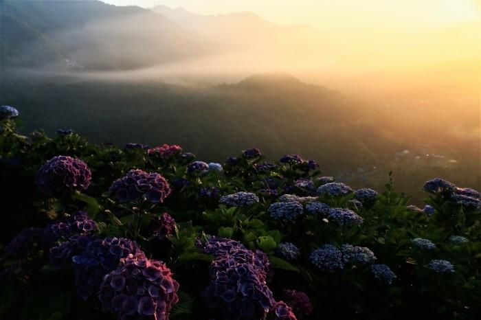 朝陽を受けて_f0371447_11130521.jpg