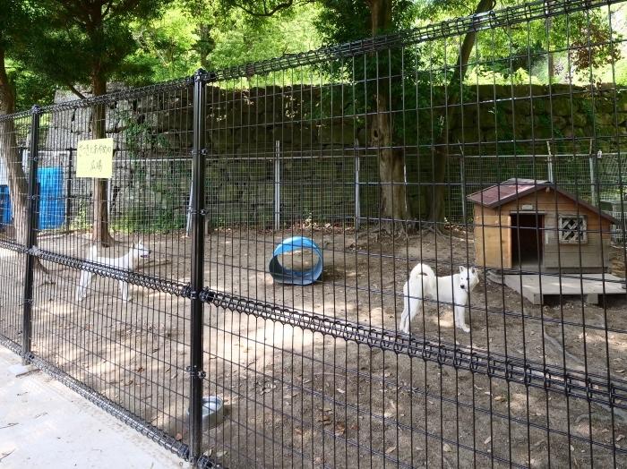お城の動物園  2019-07-05 00:00      _b0093754_21320377.jpg