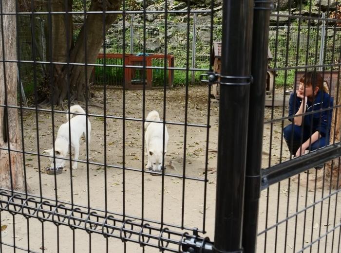 お城の動物園  2019-07-05 00:00      _b0093754_21324852.jpg