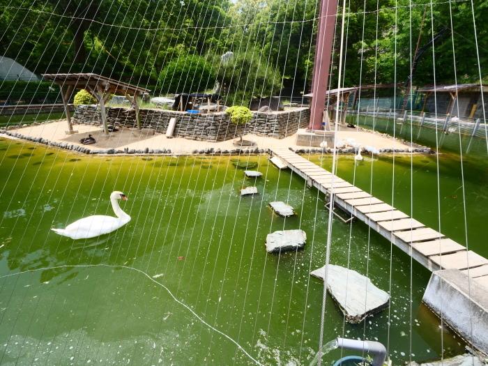 お城の動物園  2019-07-05 00:00      _b0093754_21342239.jpg