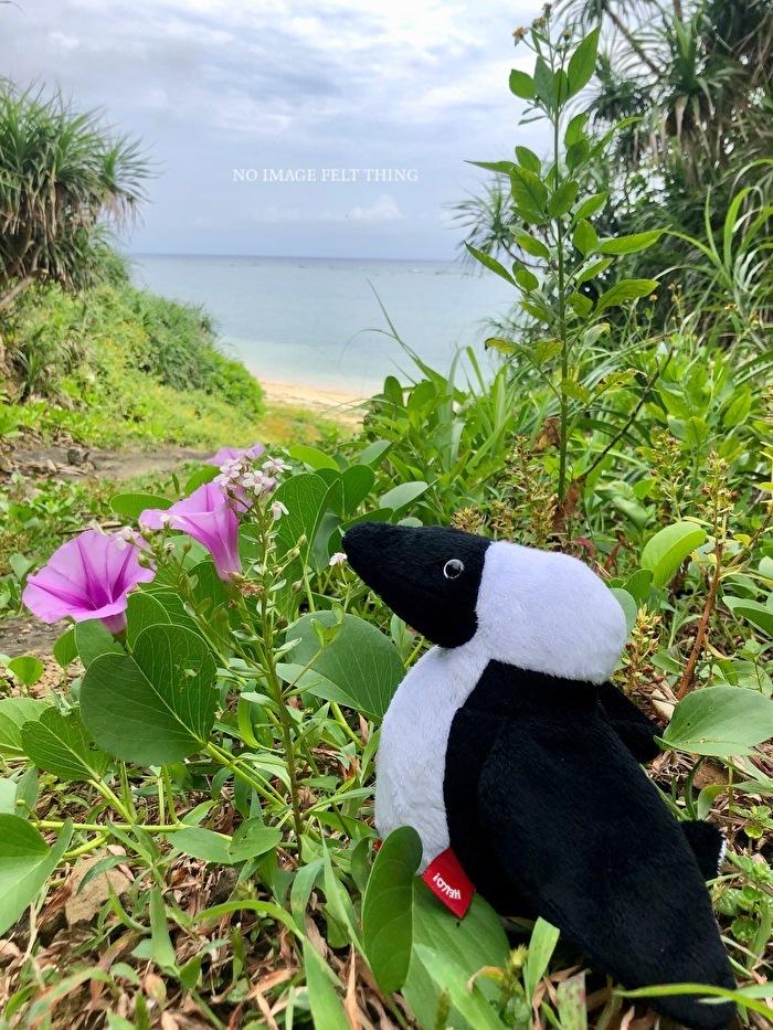 南の島へ行ってきました*2019②*3日目♪_d0367763_20110551.jpg