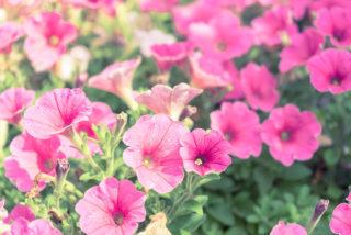 花づくり講習会に行ってきましたー後編_a0152665_12004692.jpeg