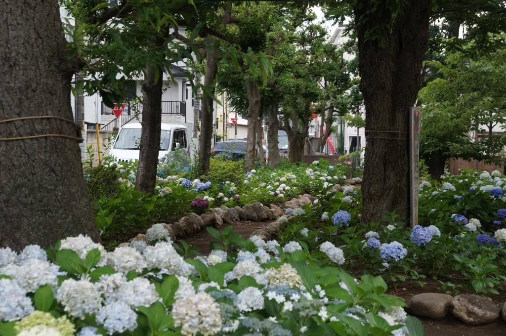 念ずれば 花ひらく ~福岡中央公園を愛し育てる会~_a0107574_22243224.jpg