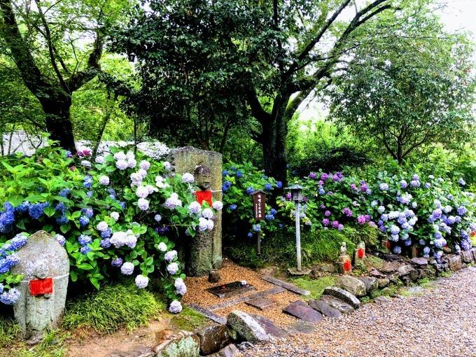 梅雨に入り、大変きれいな状態が続いております(2019年6月28日現在)_b0140774_08062729.jpg