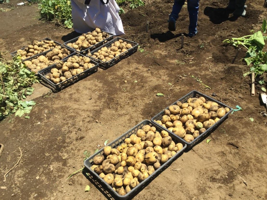 2019年6月29日夏やさい収穫まつりは、7月20日(土)に延期します_c0091679_23262240.jpg