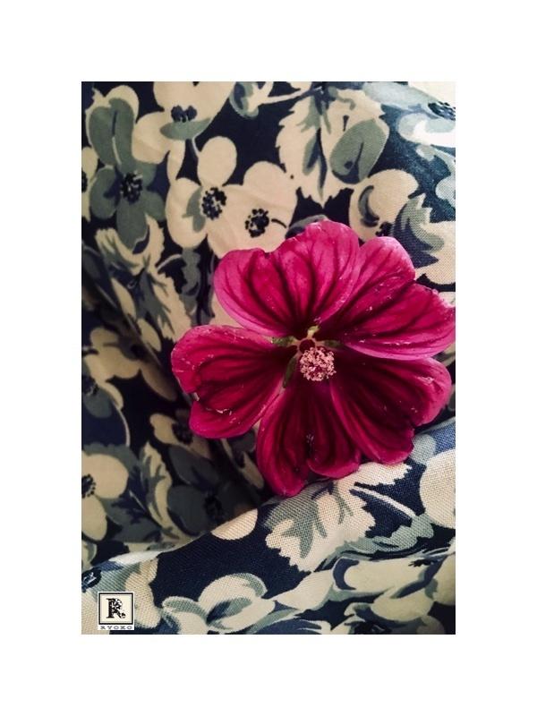マロウの花が咲きました。_c0128489_16082076.jpg