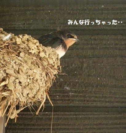 我が家のツバメ日記 ~ 涙の別れ編 ~_f0368691_15453511.jpg