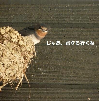 我が家のツバメ日記 ~ 涙の別れ編 ~_f0368691_15461636.jpg