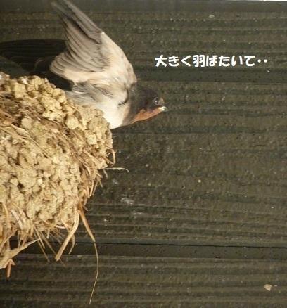 我が家のツバメ日記 ~ 涙の別れ編 ~_f0368691_15463504.jpg
