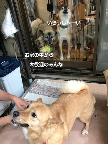 あんこちゃん 新生活再スタート!_f0242002_16114724.jpg