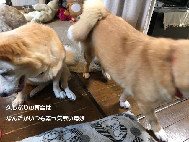 あんこちゃん 新生活再スタート!_f0242002_16142912.jpg