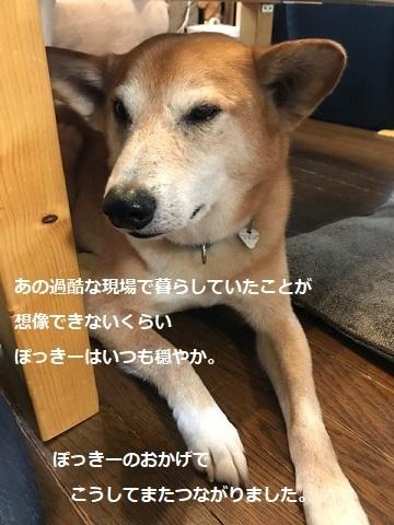 あんこちゃん 新生活再スタート!_f0242002_16143872.jpg
