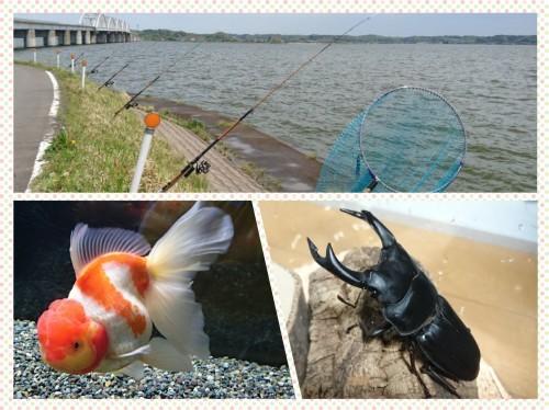 「釣り」か「金魚」か「クワガタ」か…_b0298605_19185366.jpg