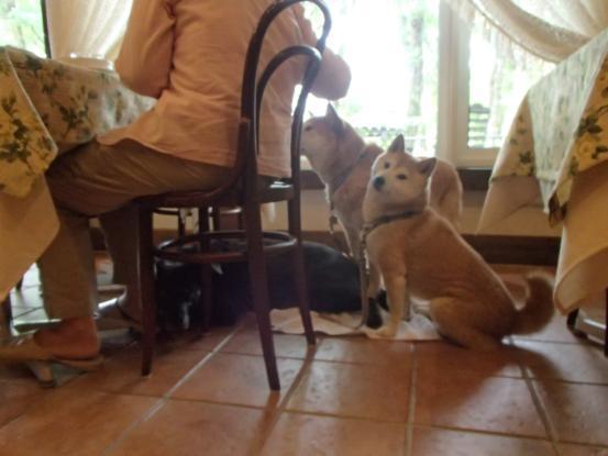 初めて見た犬の義眼_f0064906_14173042.jpg
