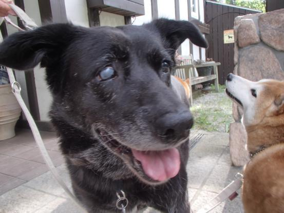 初めて見た犬の義眼_f0064906_14173409.jpg