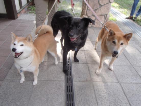 初めて見た犬の義眼_f0064906_14173742.jpg