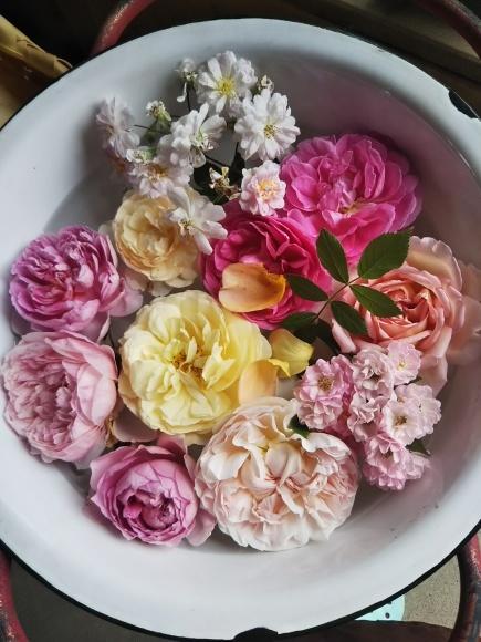 薔薇!バラ!ばら!イベント_f0316507_21305503.jpg