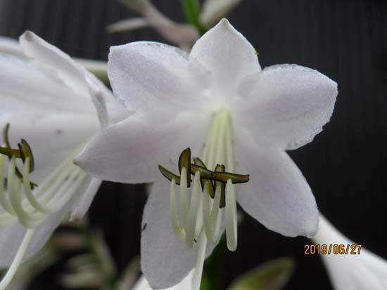 夏花が菜園で咲いた_e0048413_17545449.jpg
