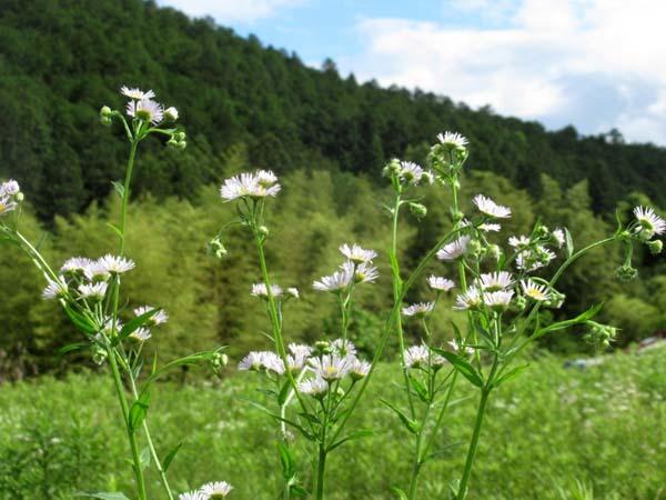 夏花が菜園で咲いた_e0048413_17551743.jpg