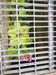 役場周辺の花々_d0003224_16075501.jpg