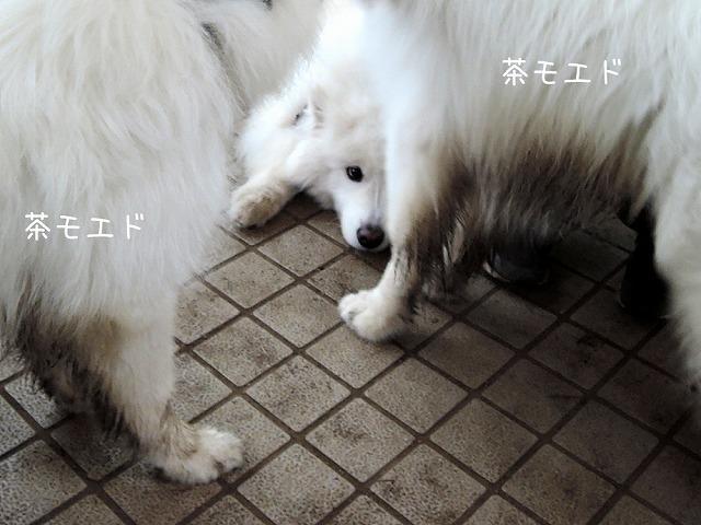 朝活_c0062832_14594453.jpg