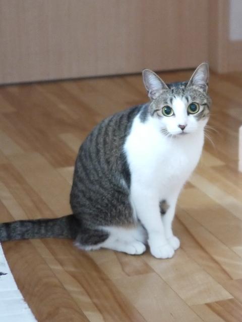 猫のお留守番 ゆずちゃん編。_a0143140_23004141.jpg