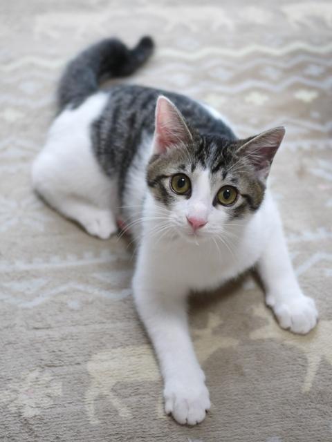 猫のお留守番 福くん編。_a0143140_23020102.jpg