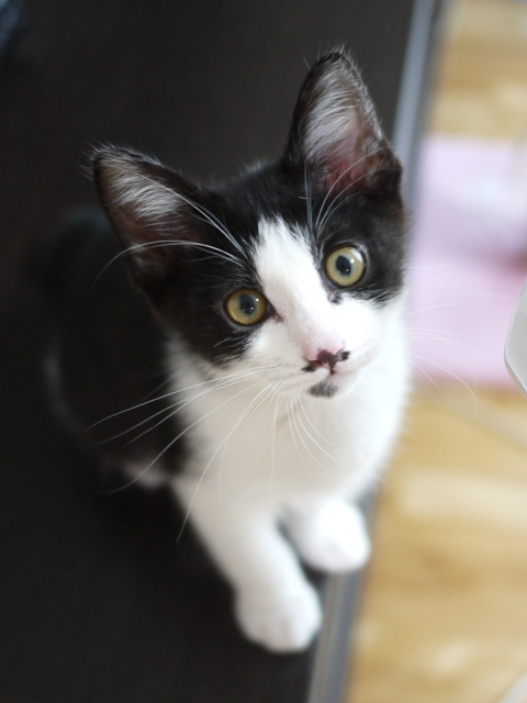 猫のお留守番 メイちゃん編。_a0143140_23044558.jpg