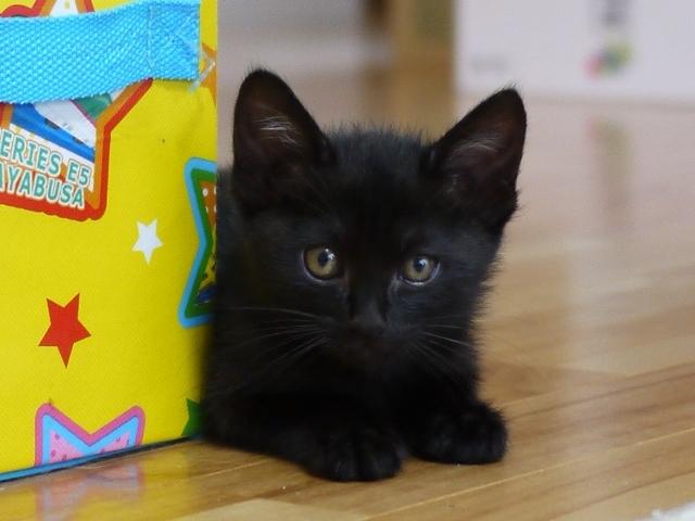 猫のお留守番 チョコちゃん編。_a0143140_23064541.jpg