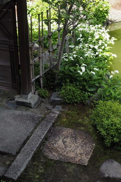 初夏の京都生き物めぐり(老夫婦梅雨時京都よろよろ日記)_d0027243_11151080.jpg