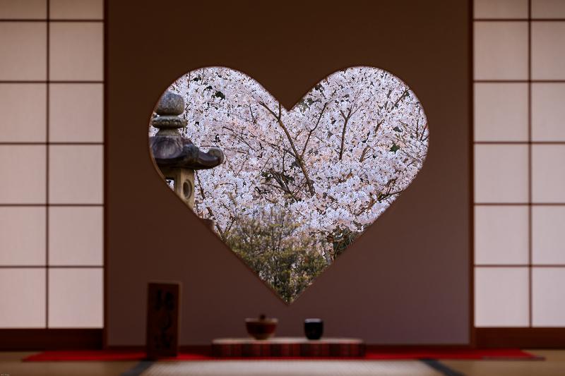 桜咲く京都2019 ハートの夜桜(宇治田原町・正壽院)_f0155048_2010473.jpg
