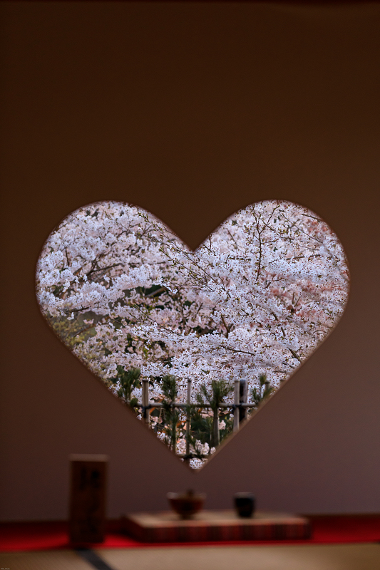 桜咲く京都2019 ハートの夜桜(宇治田原町・正壽院)_f0155048_20105996.jpg