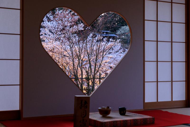桜咲く京都2019 ハートの夜桜(宇治田原町・正壽院)_f0155048_20134234.jpg