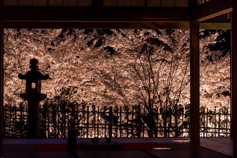 桜咲く京都2019 ハートの夜桜(宇治田原町・正壽院)_f0155048_20185846.jpg