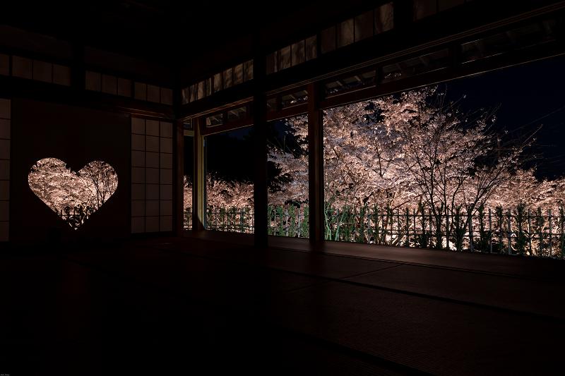 桜咲く京都2019 ハートの夜桜(宇治田原町・正壽院)_f0155048_20285282.jpg