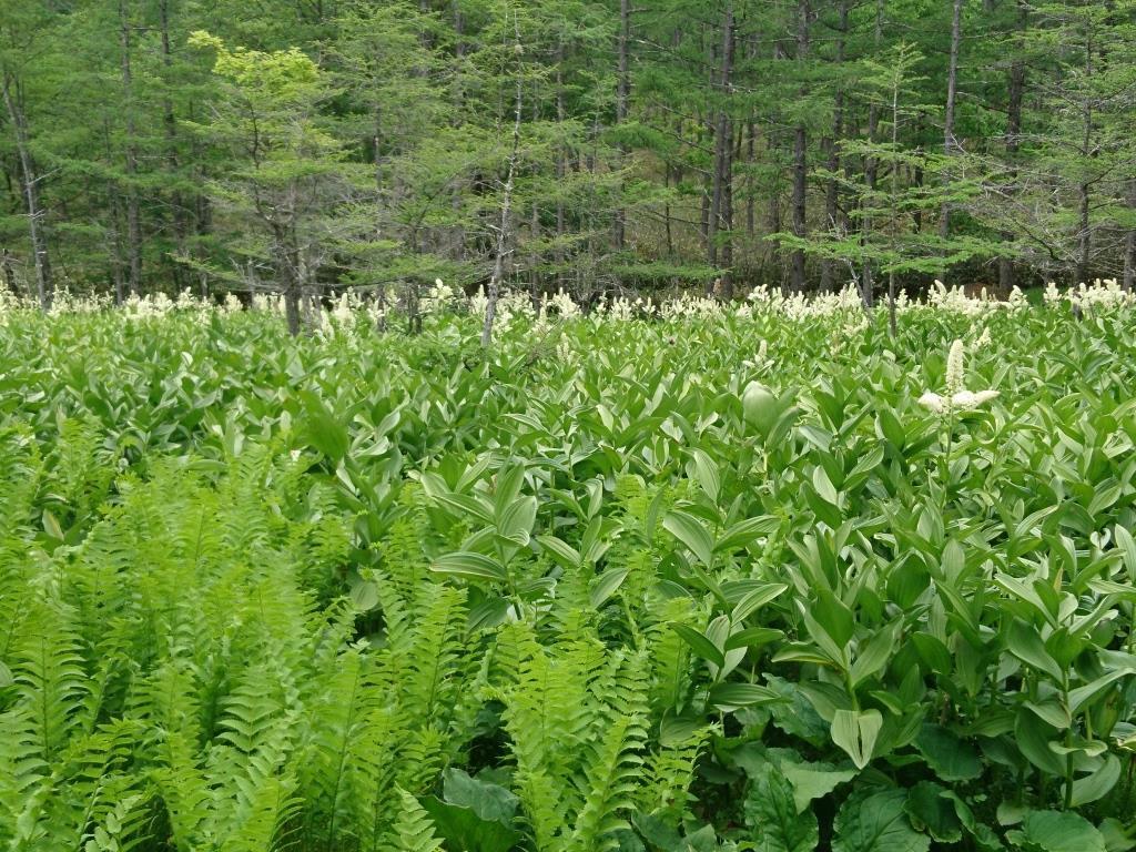 白樺の林_f0043750_08532274.jpg