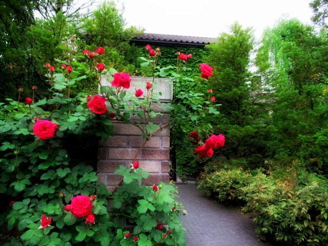 トップローズシーズンの軽井沢レイクガーデン * Elevenses Tea Roomsのランチ♪_f0236260_05380835.jpg