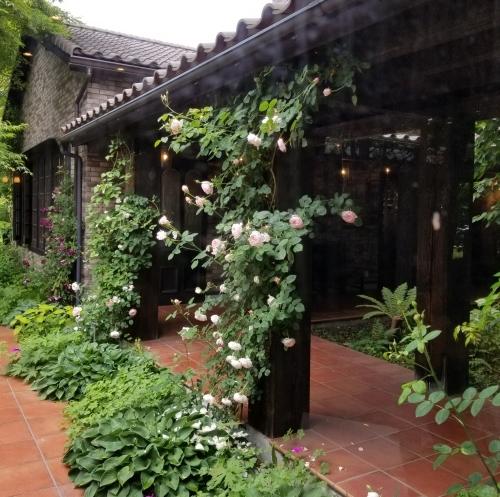 トップローズシーズンの軽井沢レイクガーデン * Elevenses Tea Roomsのランチ♪_f0236260_12174873.jpg