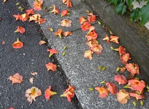 今年は穏やかな雨であって欲しい_b0102572_09375095.jpg