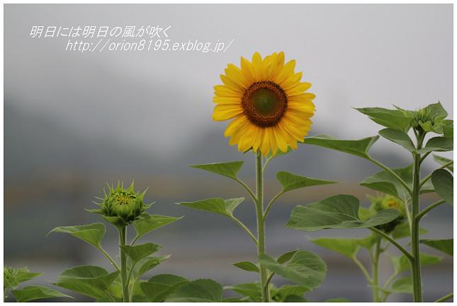 f0361079_12233341.jpg