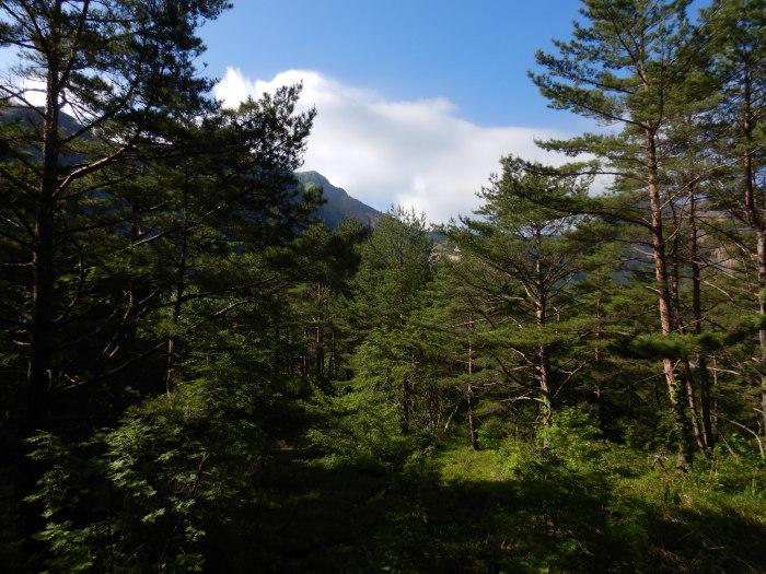 バンダイクワガタ咲く磐梯山へ ~ 2019年6月26日_f0170180_15282576.jpg