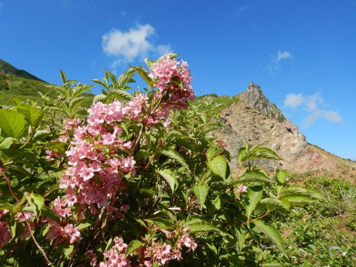 バンダイクワガタ咲く磐梯山へ ~ 2019年6月26日_f0170180_16151791.jpg