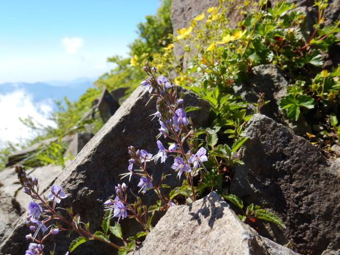 バンダイクワガタ咲く磐梯山へ ~ 2019年6月26日_f0170180_17014442.jpg