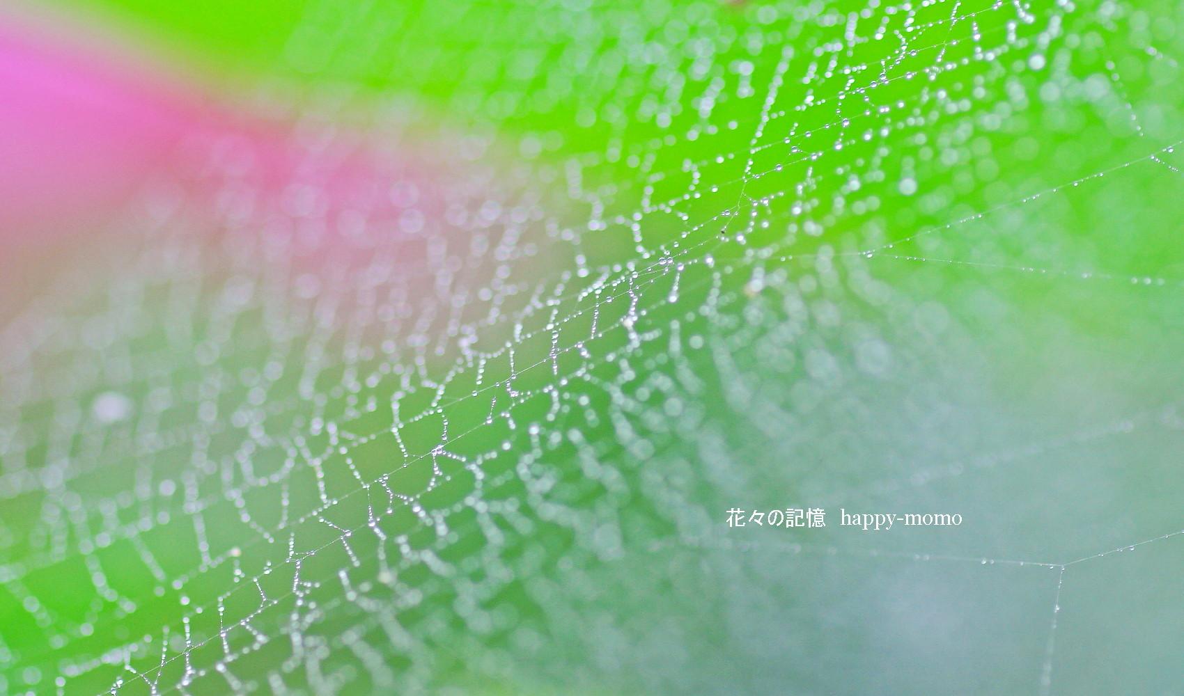 梅雨の紫陽花・・_c0357781_13592074.jpg