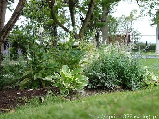 梅雨の庭しごと 庭に咲いた宿根草の花_c0293787_21442107.jpg
